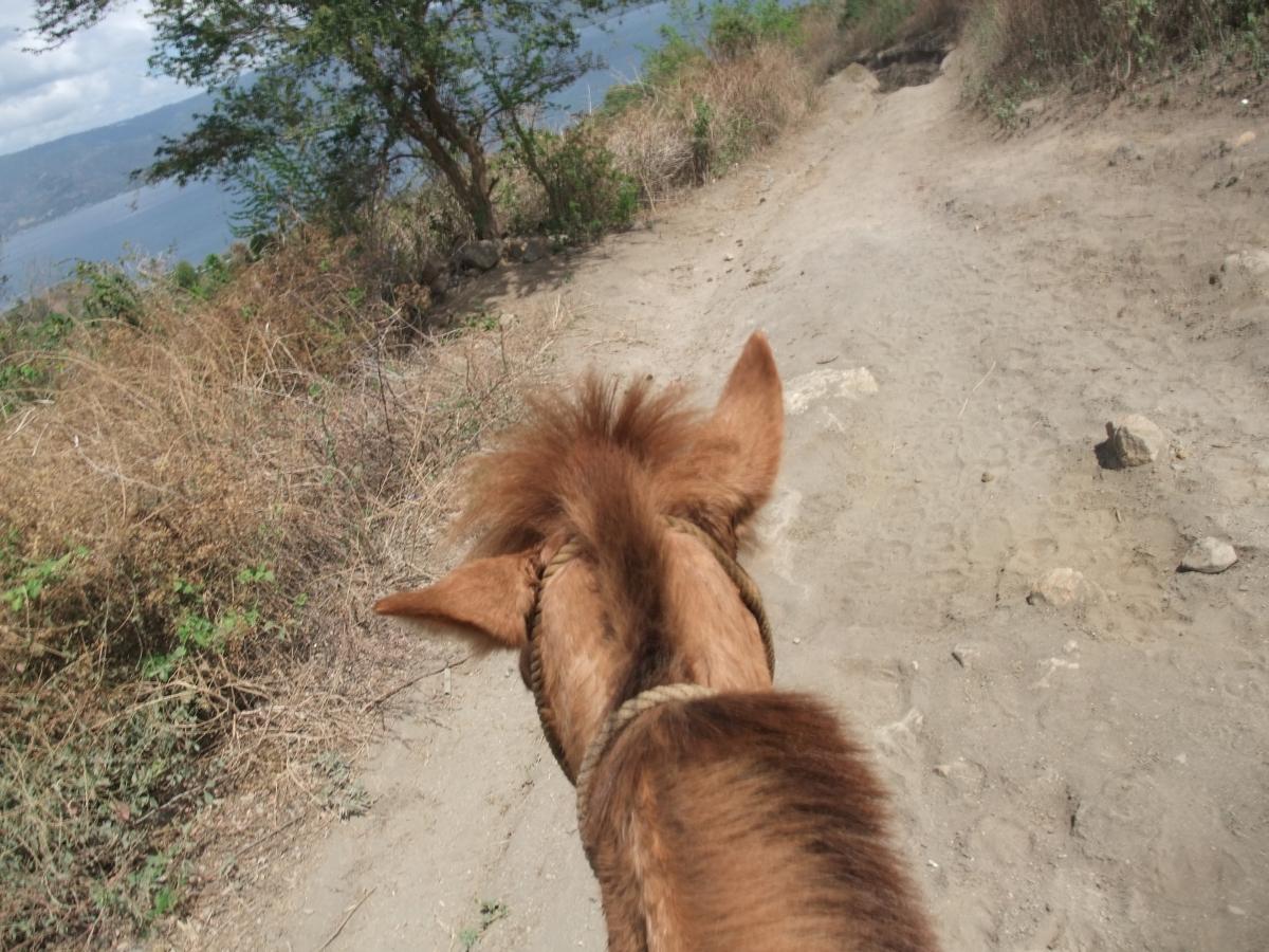 タール山 馬