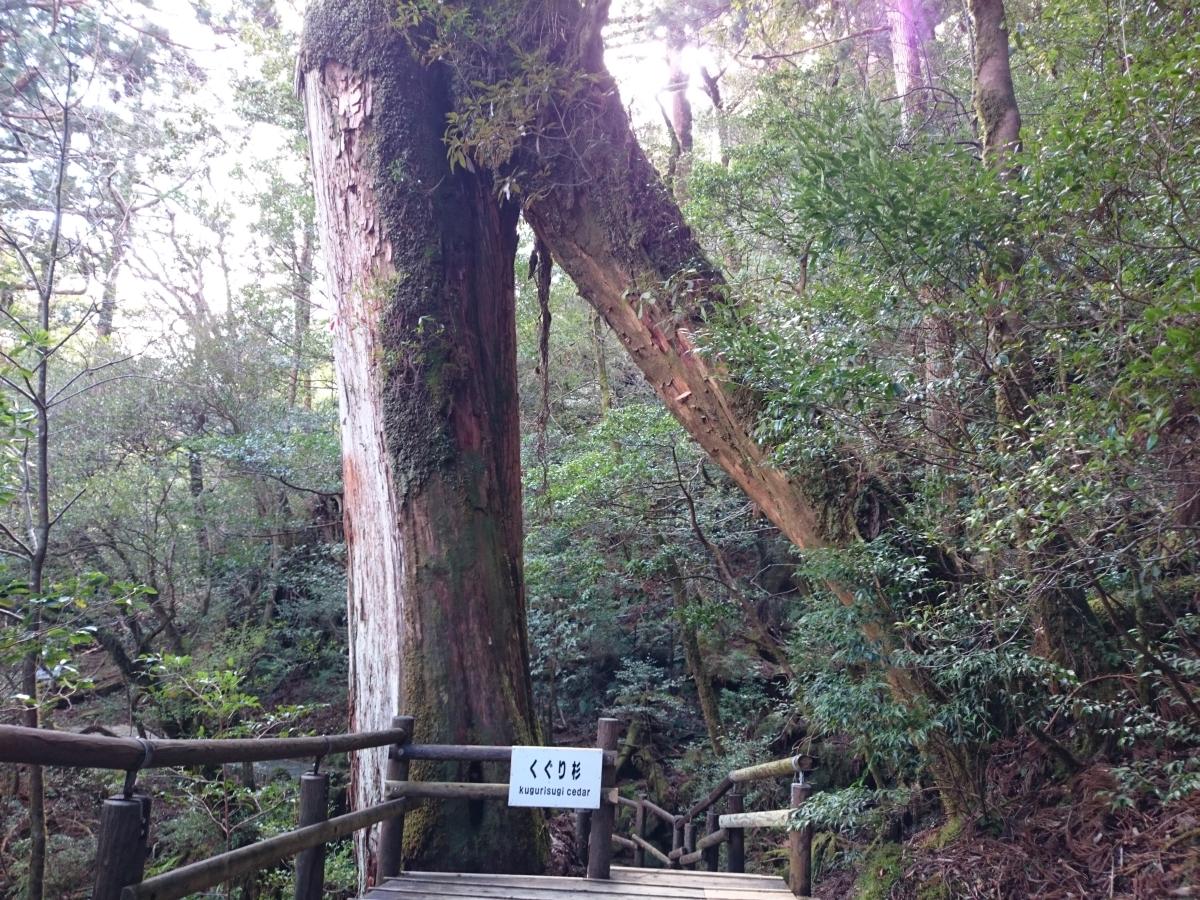 ヤクスギランド くぐり杉