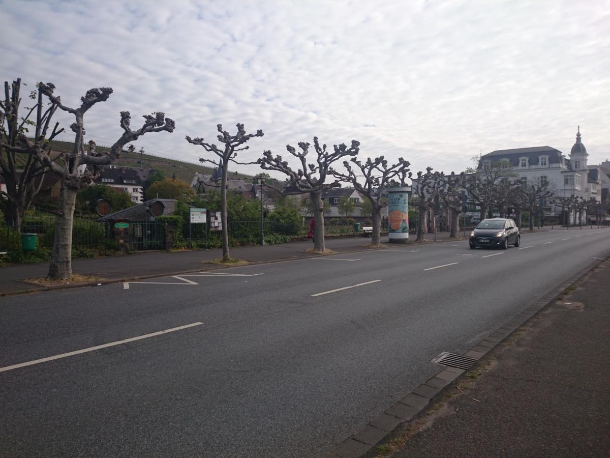リューデスハイム Rüdesheim